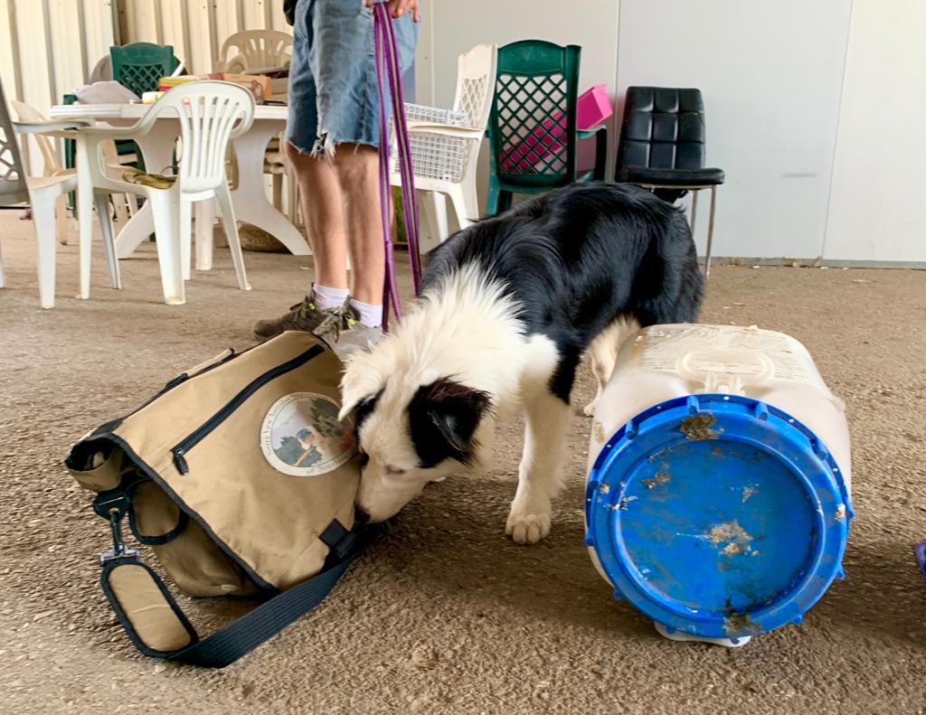 לימודי כלבי עבודה גישוש והרחה
