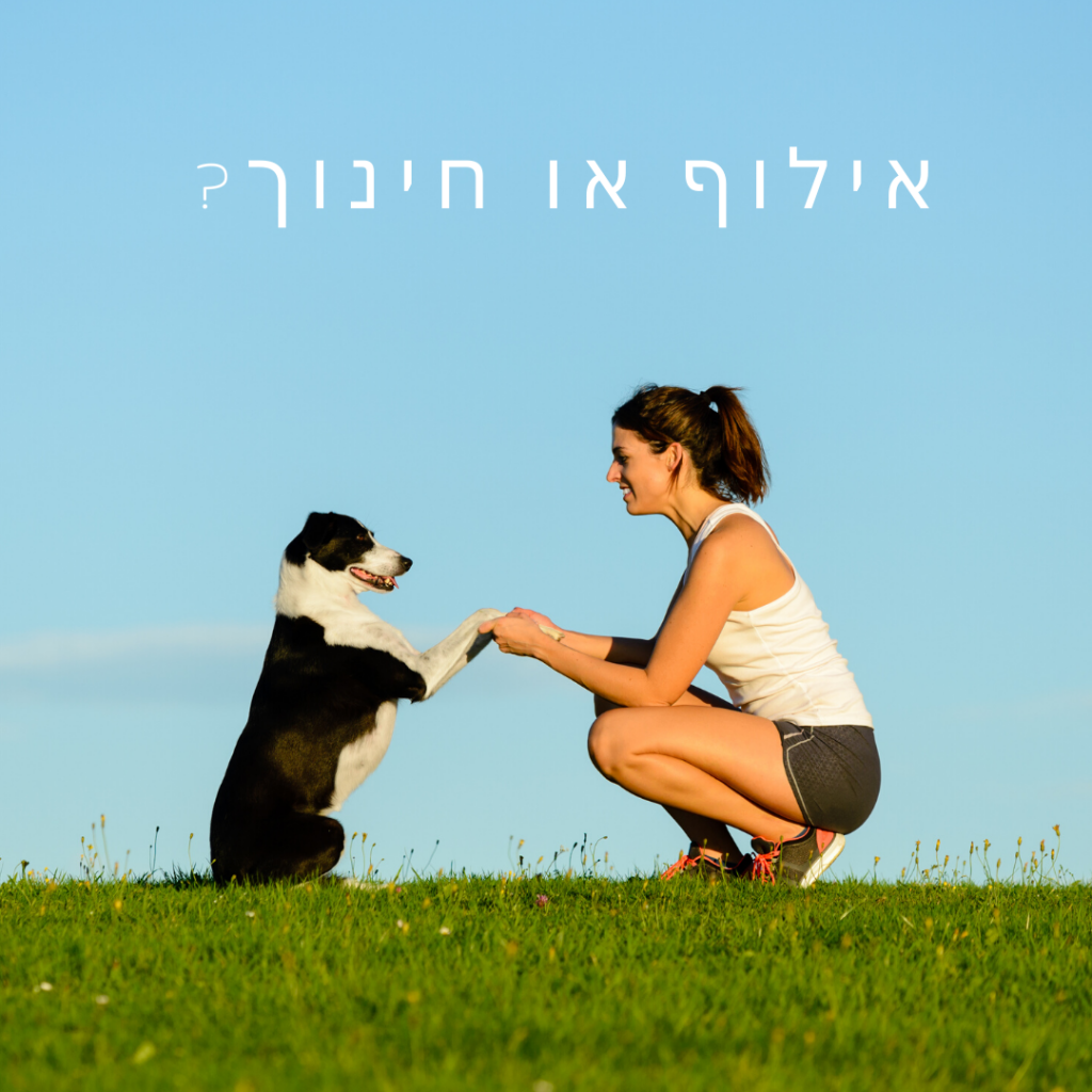 אילוף כלבים או חינוך כלבים
