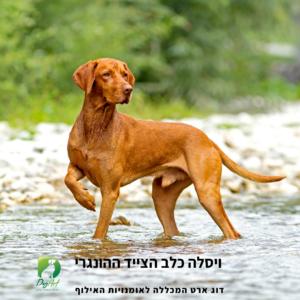 כלב ויסלה מאלף כלבים