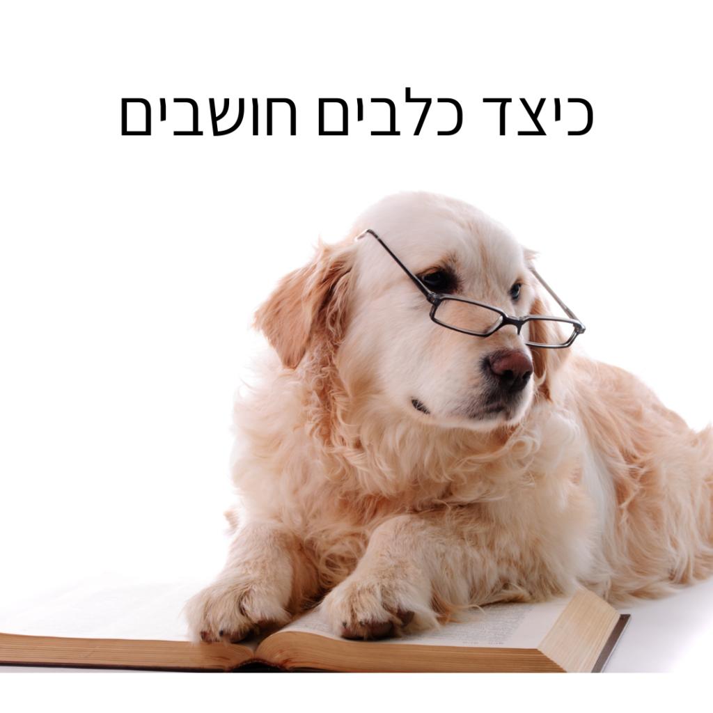 כילצד כלבים חושבים
